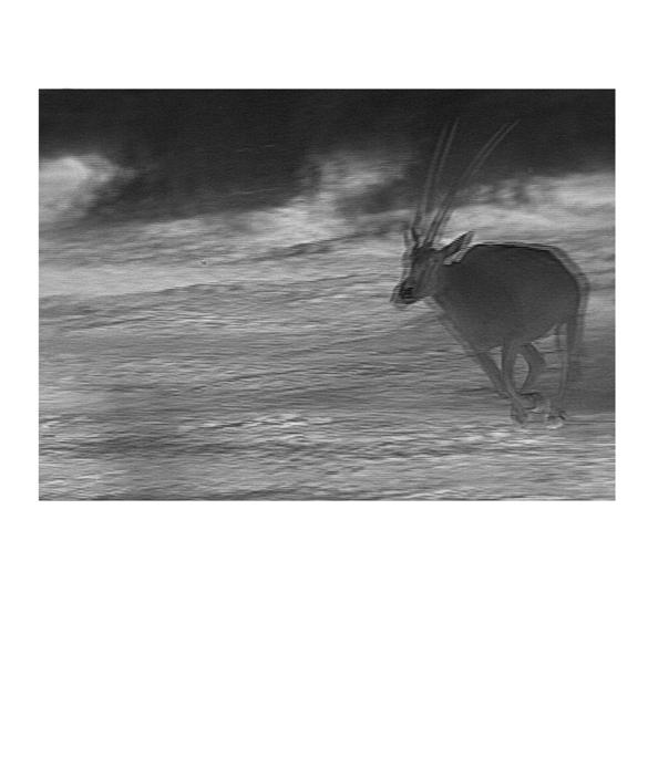 Amir Yatziv, Thermogram no 2, 2013, pigment print, 25 x 30cm.