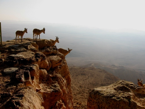 Mitzpe Ramon/Photo: Gady Lybrock